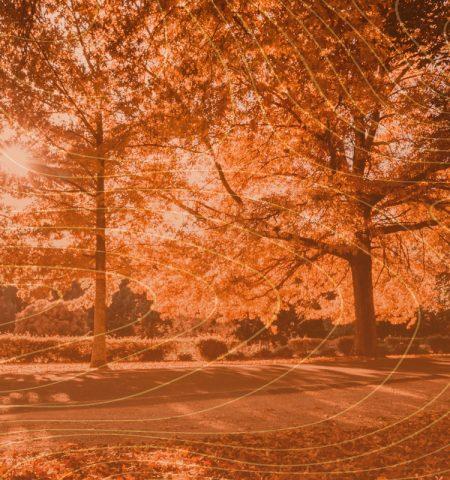 autumn-park-1920X800
